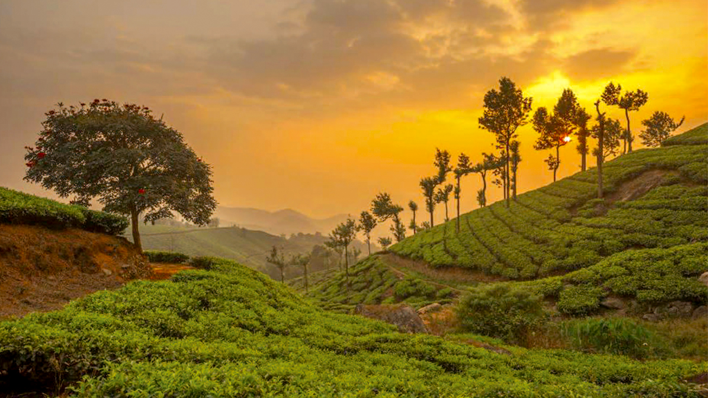 10 Reasons Why Kerala is a Paradise for Honeymooners