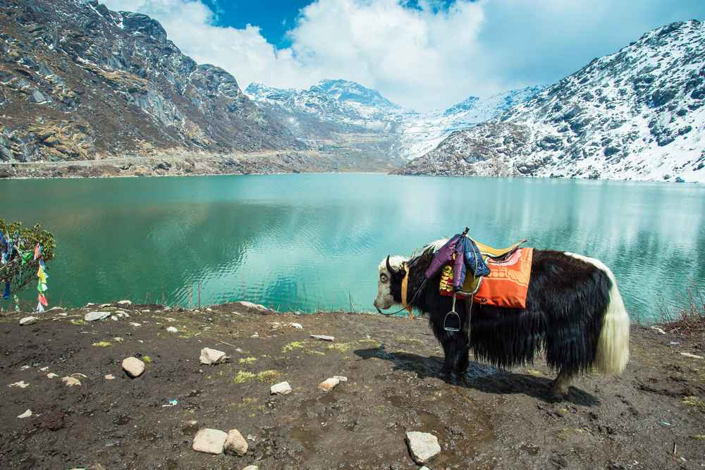 Things to See and Experience in Gangtok