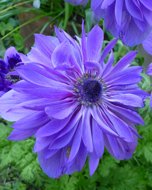 5 Dinge, die Sie beim Kauf von Tulpenzwiebeln für Ihren Garten beachten sollten