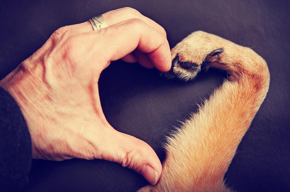 Pet Allergy Control Measures