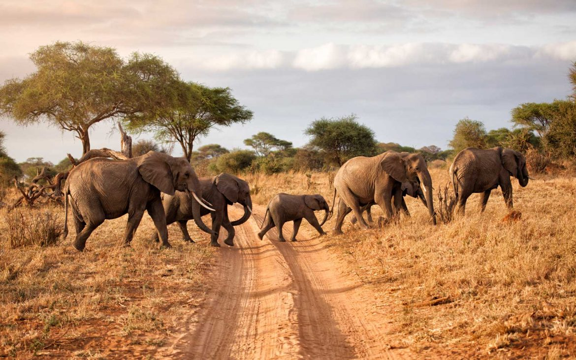 African Safari Tour Packages to Explore African in Your Own Way