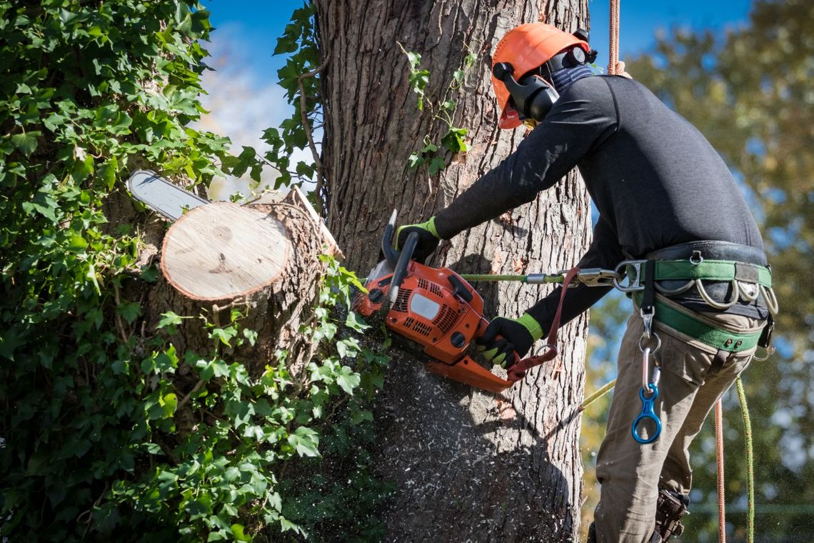 Mistakes to Avoid When Hiring Tree Removal Companies