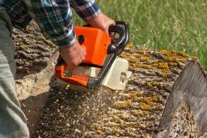 stump-removal-ottawa