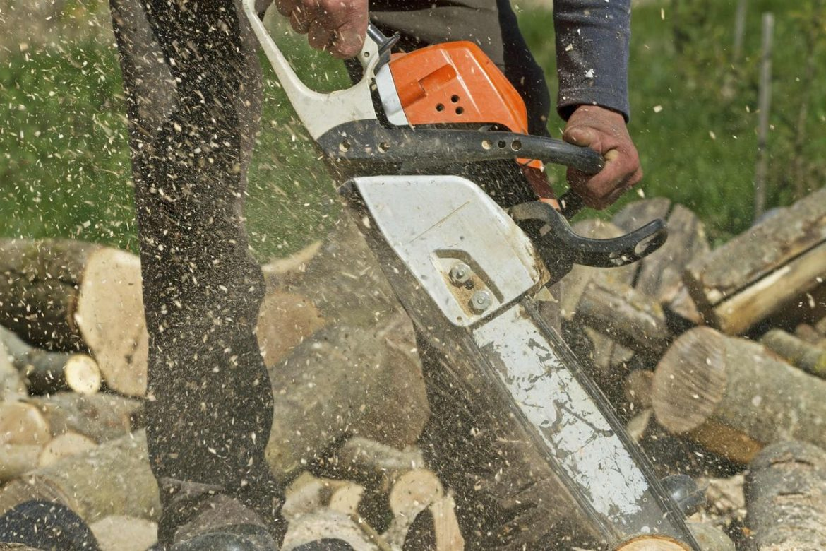 Stump Removal – Important Factors That You Need to Know
