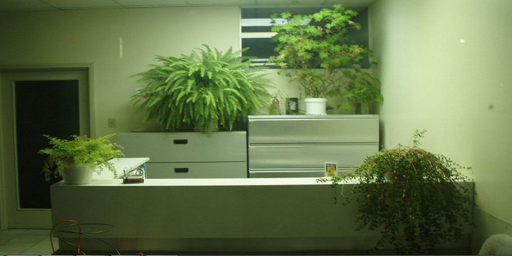 The Best Office Plant Services and Care in Philadelphia