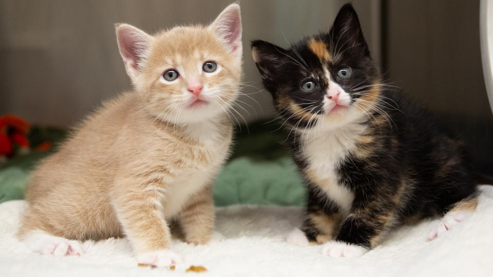 What Are The Different Types Of Cat Breeds Available At Cattery Near Me?