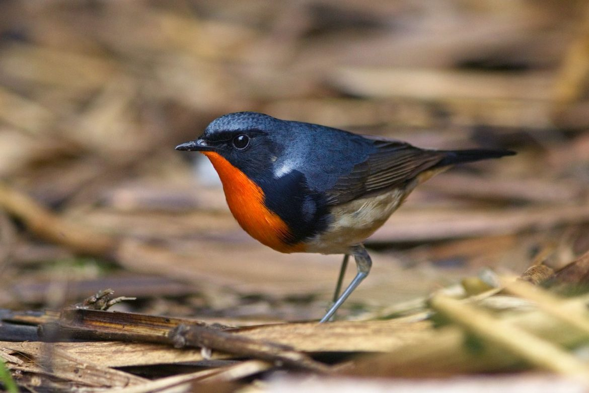 China Bird Watching Tours: Book Your Calendar for these Trips