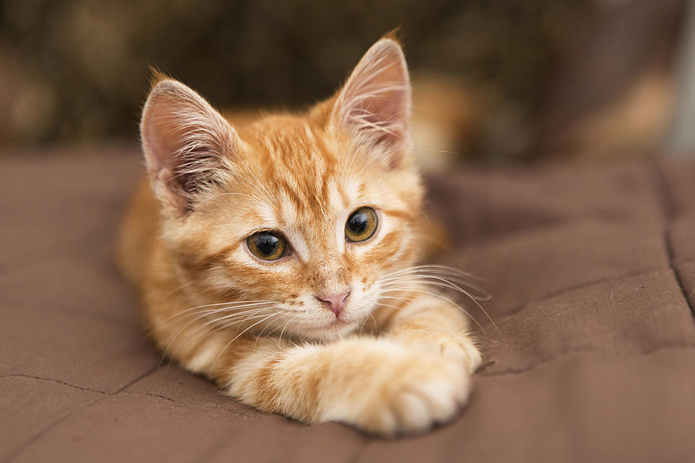 Which Things To Lookout For When Buying From A Cat Breeder In Pa?